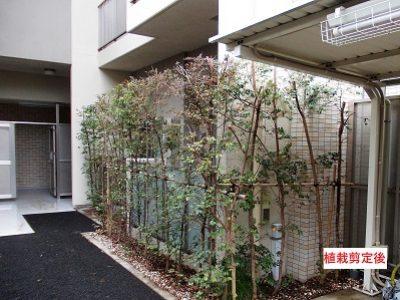植栽管理(庭木の剪定・消毒・施肥) 【集合住宅さん】