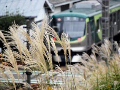 ススキと東急池上線【鉄道】